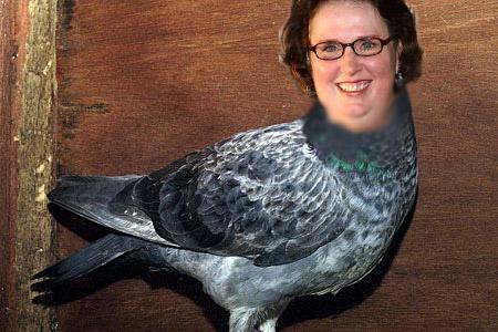 phyllispigeon